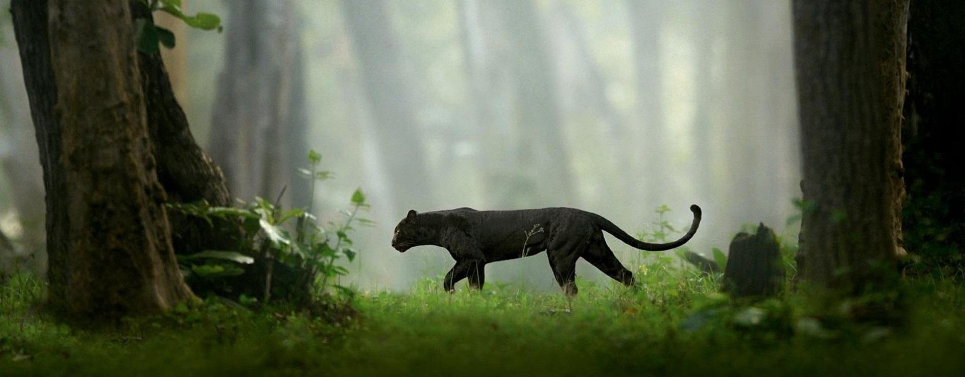 wildlife Karnataka