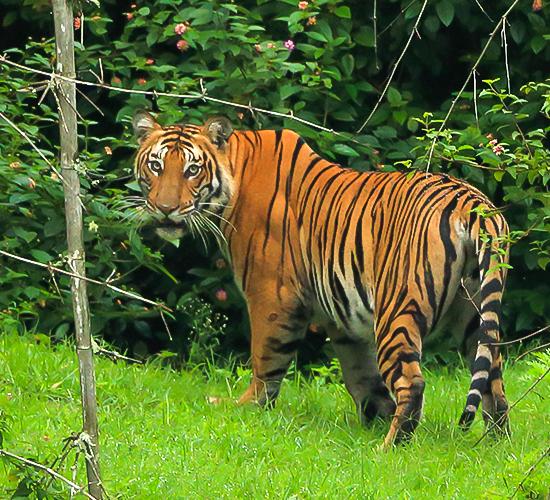 ಬಂಡೀಪುರ ರಾಷ್ಟ್ರೀಯ ಉದ್ಯಾನ