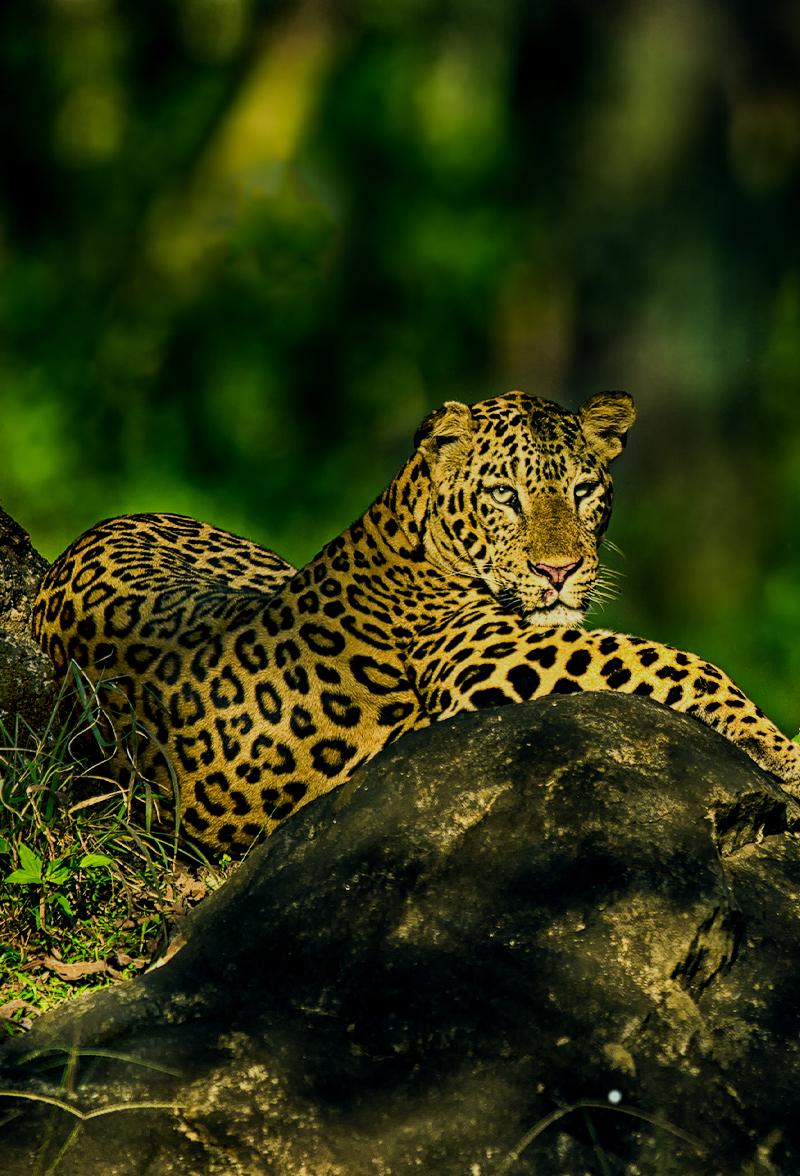 Chikkamagaluru Bhadra Tiger Reserve