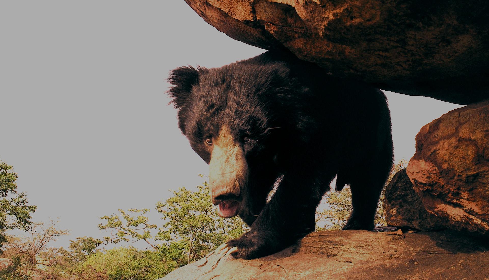 Daroji Sloth Bear Sanctuary-Hampi
