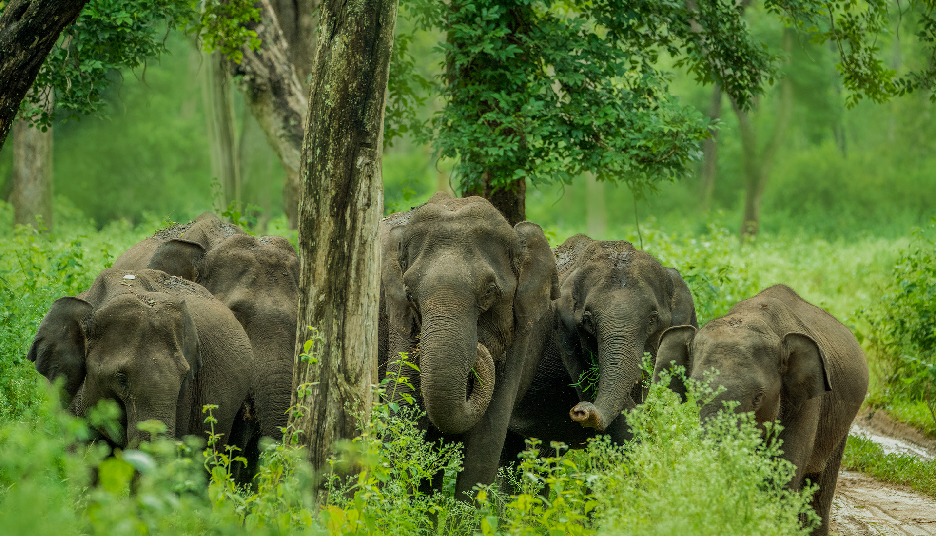 Bandipura Wild Elephants