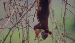 Sharavathi Valley Wildlife Sanctuary