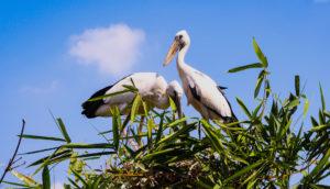 Ranganatittu bird sanctuary