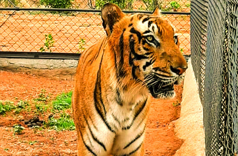 atal bihar vajpayee zoological park