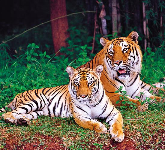 Nagarahole National Park - Wildlife Safari