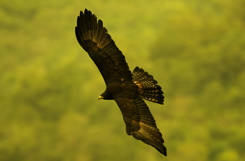 Karnataka Bird Festival