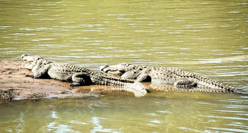Dandeli Crocodile Park