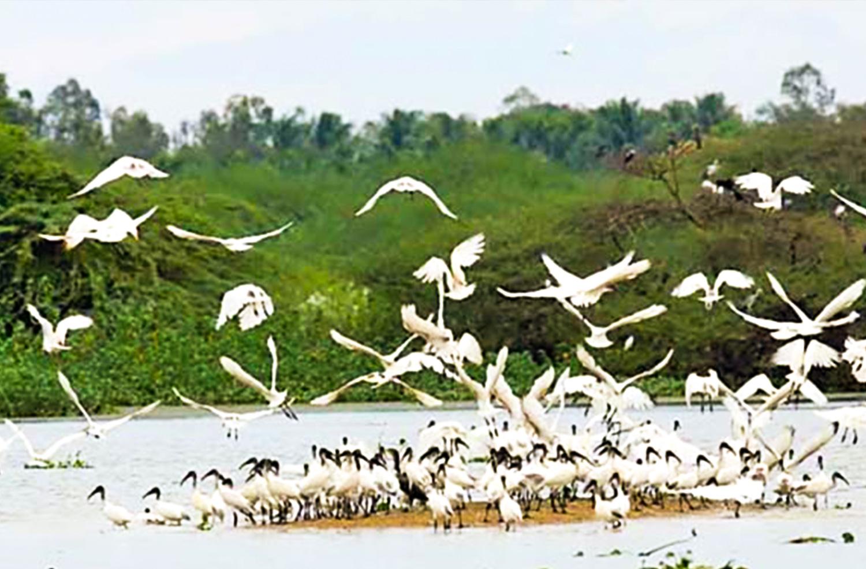 Ghataprabha Bird Sanctuary