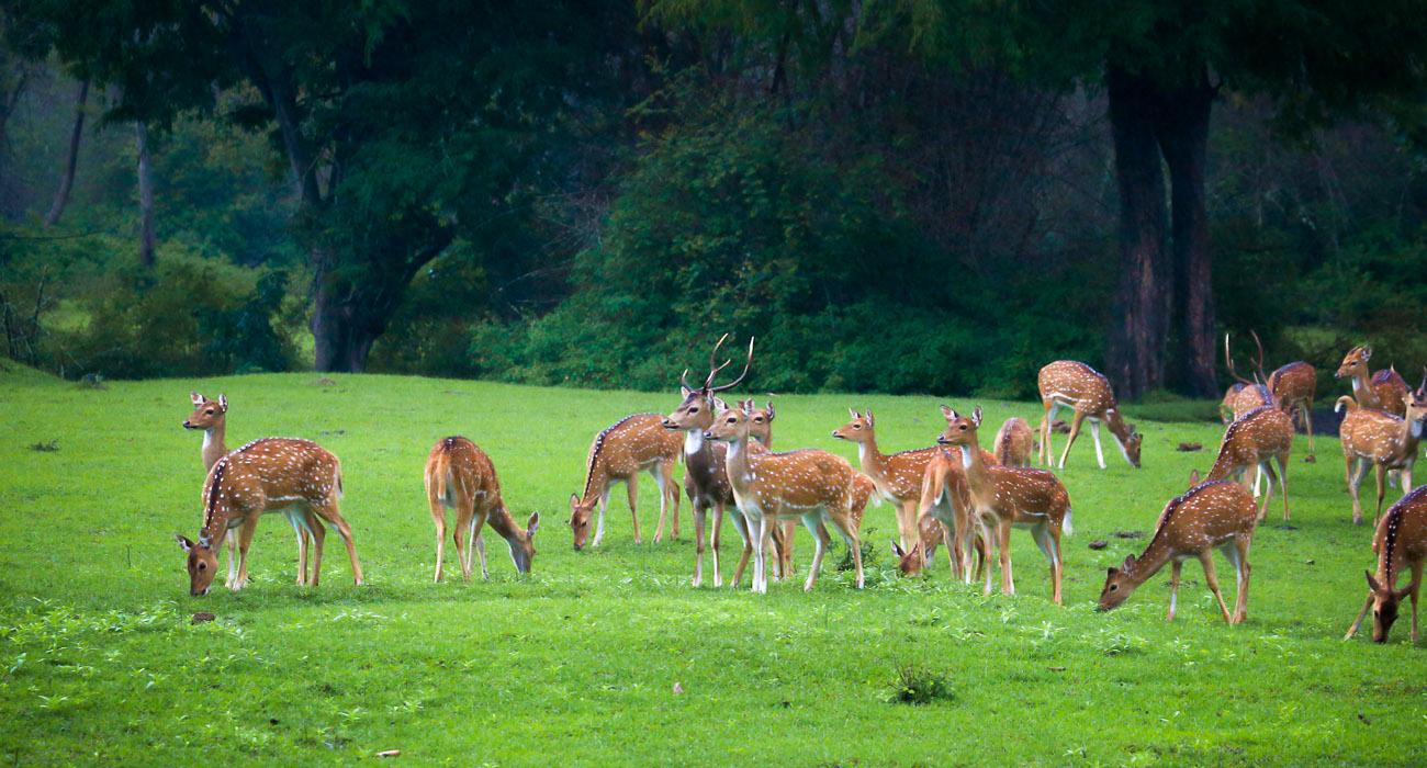 Wildlife In Karnataka