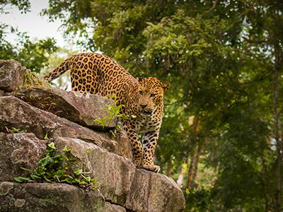 BR Tiger Reserve